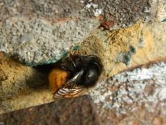 abeille01.jpg