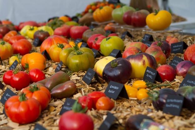 tomato05.jpg